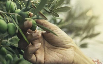 Effects of Olive Leaf Extract on Microbial Infections