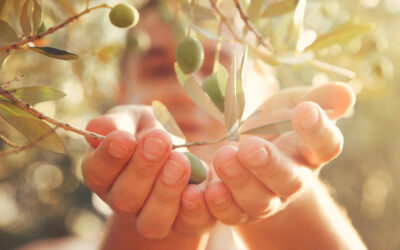 What is Olive Leaf Extract Good For?